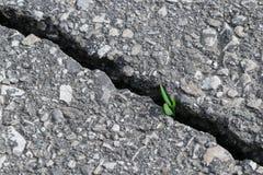 A través de una grieta en el asfalto rompe y produce un brote de la hierba con las hojas Imágenes de archivo libres de regalías