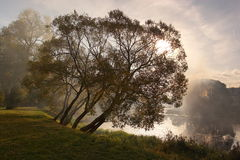 A través de una niebla imagen de archivo libre de regalías
