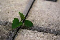 A través del asfalto Fotografía de archivo libre de regalías