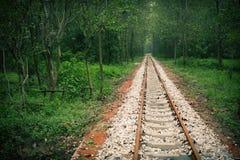 A través del bosque Fotografía de archivo libre de regalías