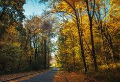 A través del bosque Foto de archivo