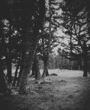 A través del bosque Foto de archivo libre de regalías