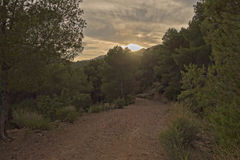 A través del desierto de las palmas Foto de archivo