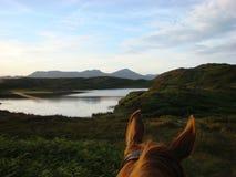 A través del faro el Tarn de los oídos de los caballos Imágenes de archivo libres de regalías
