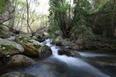 A través del río en el bosque profundo Foto de archivo libre de regalías