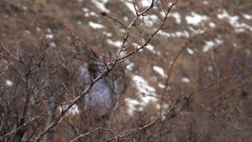 A trav?s de los arbustos almacen de metraje de vídeo