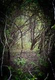 A trav?s del bosque foto de archivo libre de regalías