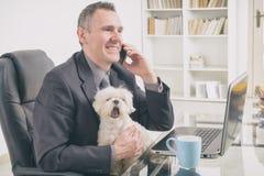 Travail avec le chien à la maison photographie stock libre de droits