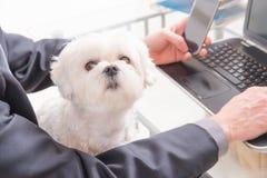 Travail avec le chien dans le bureau Photo stock