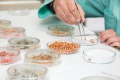 Travail avec le matériel biologique dans le laboratoire photographie stock