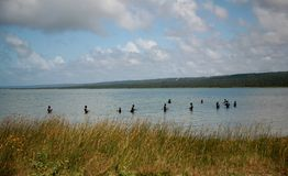 Travail d'équipe de pêcheur dans la lagune Images libres de droits
