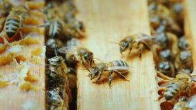 Travail d'abeilles à l'intérieur de la ruche Photographie stock