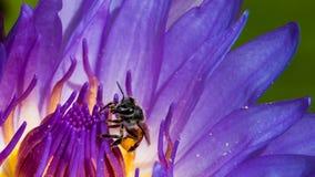 Travail d'abeilles Image stock