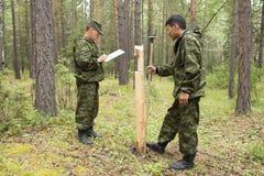 Travail d'inspecteurs de forêt dans la forêt Photos libres de droits
