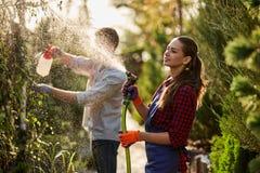 Travail dans le jardin La jardinière de fille pulvérise l'eau et un type pulvérise l'engrais sur des usines dans le beau crèche-j image stock
