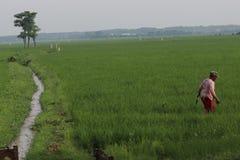 travail dans un domaine de riz photo libre de droits