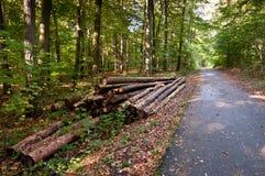 Travail de forêt photos stock
