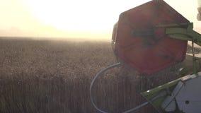 Travail de fragment d'outil de moissonneuse dans le temps de récolte de céréale de blé 4K banque de vidéos