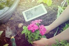 Travail de jardin avec la Tablette d'affaires, les fleurs et les outils de jardinage blancs à côté d'un étang Photo libre de droits