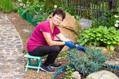 Travail de jardin La femme supérieure de sourire positive coupant l'usine conifére utilisant une haie cisaille sur elle photo stock