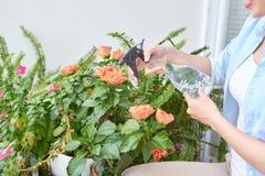 Travail de jardin Protection contre les maladies et insectes par la pulv?risation avec des mesures de sauvegarde photos libres de droits