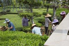 Travail de jardiniers en parc Image libre de droits