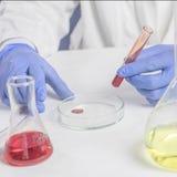 Travail de laboratoire, mains masculines tenant un tube à essai, dans les gants en caoutchouc bleus, une analyse de sang photographie stock libre de droits