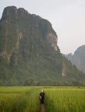 Travail de rizière photographie stock