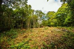 Travail de sylviculture - fabrication d'une clairière dans la réserve naturelle du bois antérieure, Crowhurst, le Sussex est, Ang photos libres de droits