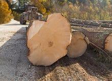 Travail du bois dans la forêt Photographie stock libre de droits