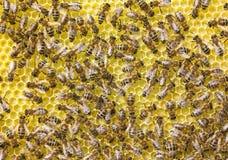 Travail harmonieux de l'équipe d'abeilles pour créer un nid d'abeilles image libre de droits