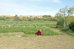 Travailler à la terre dans une oasis Photo stock