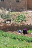 travailler de femmes Image libre de droits