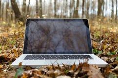 Travailler sur l'ordinateur portable dans la forêt d'automne Image stock