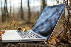 Travailler sur l'ordinateur portable dans la forêt d'automne Images libres de droits