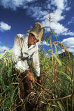 Travailleur agricole, Brésil Photos libres de droits