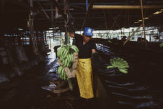Travailleur Costa Rica de banane Photos libres de droits