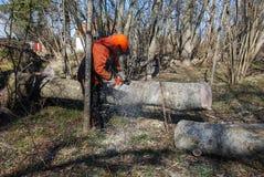 Travailleur coupant un tronc d'arbre Images stock