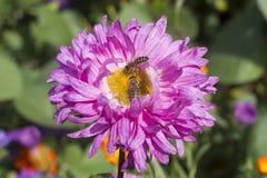 Travailleur d'abeilles Images libres de droits