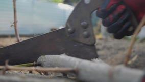 Travailleur d'homme sciant sciant une branche d'arbre avec ses mains ralenti en gros plan en bois sciant d'homme de scie à métaux banque de vidéos