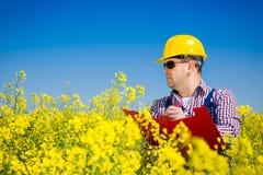 Travailleur dans un domaine de graine de colza faisant l'inspection pour la production de biodiesel photo stock