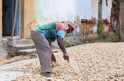 Travailleur de gingembre dans le fort Cochin, Inde Image libre de droits