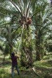 Travailleur de plantation Photos libres de droits