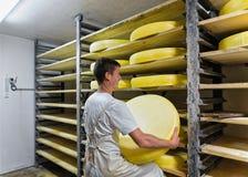 Travailleur enlevant le fromage de vieillissement de Comte à la cave de maturation dans la laiterie Photos libres de droits