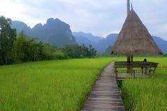 Travailleur laotien sarclant les rizières Photographie stock libre de droits