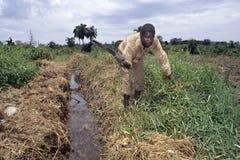 Travailleur ougandais de ferme travaillant aux terres cultivables photographie stock libre de droits