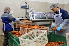 Travailleurs assortissant la carotte dans une usine de traitement des denrées alimentaires des produits alimentaires image stock