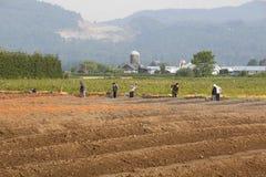 Travailleurs canadiens de ferme d'Indien est Image stock