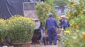 Travailleurs Carry Tangerine Tree Pots le chariot et les grands automnes d'arbre banque de vidéos