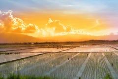 Travailleurs dans une rizière au coucher du soleil Photographie stock